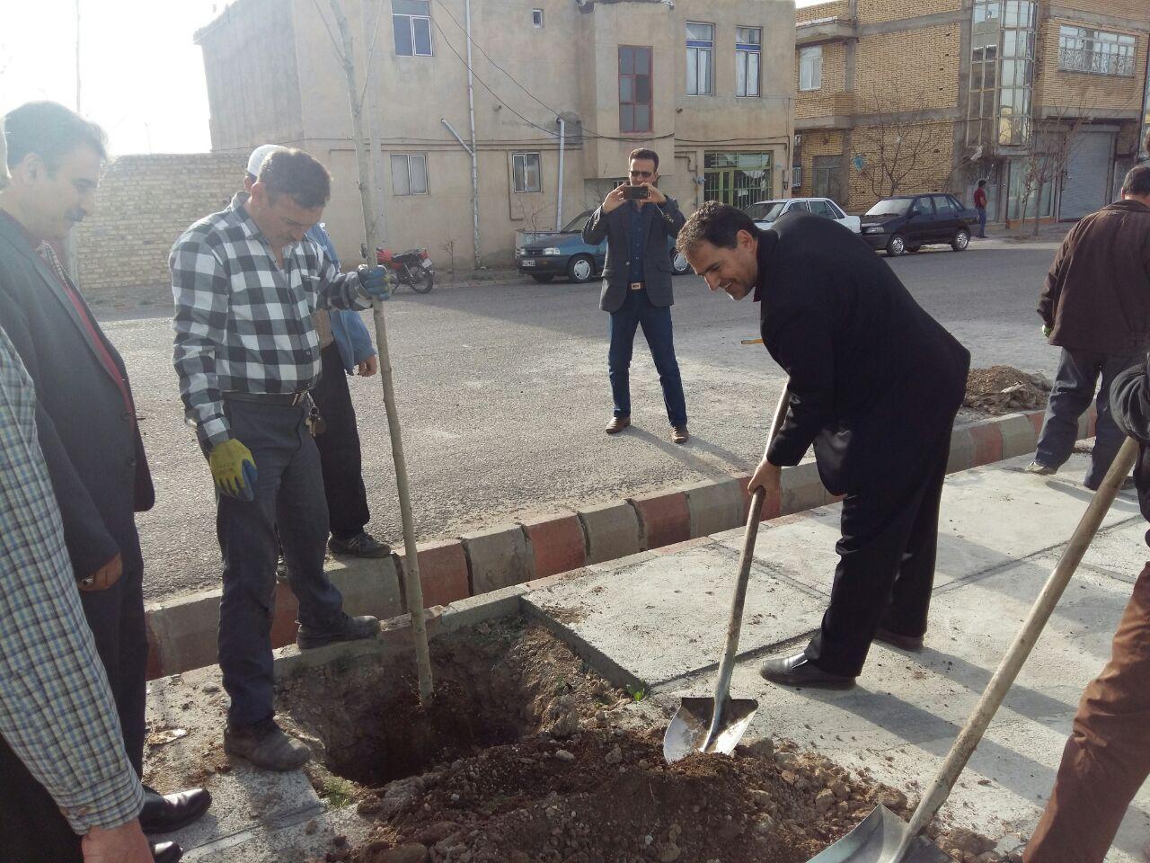 کاشت نهال در خیابان فرهنگیان توسط امور شهری خدمات شهری